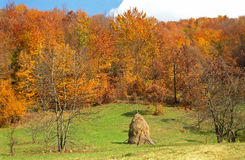 Autumn forest in the Carpathian Mountains, Romania Royalty Free Stock Photography