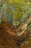 Autumn forest in the Carpathian Mountains, Romania Royalty Free Stock Photo