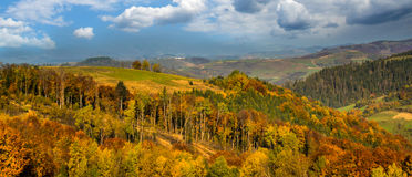 Autumn forest in the Carpathians mountains. Stock Photos