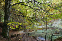 Autumn forest and cascade Royalty Free Stock Images