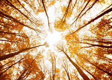 Autumn forest ceiling Royalty Free Stock Photos