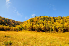 Autumn forest. 2014.10.1 on china  Autumn forest Royalty Free Stock Images
