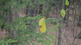 Autumn forest on a cloudy day. Leaves and trees in the autumn forest stock video