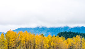 Autumn forest on cloudy day in Washington state USA. Stock Images