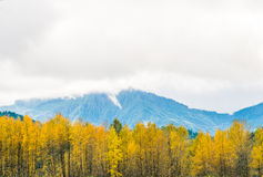 Autumn forest on cloudy day in Washington state USA. Royalty Free Stock Photography