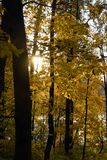 Autumn forest. Color photo taken in Tsaritsyno park in Moscow. royalty free stock photography