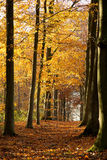 Autumn Forest - 01 Royalty Free Stock Photo