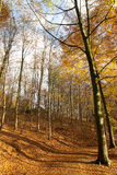 Autumn Forest - 02 Royalty Free Stock Photos
