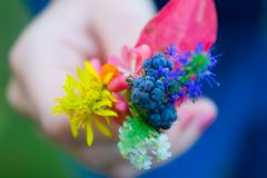 Autumn forest colorful bouquet in child hand. Colorful autumn bouquet of forest flowers and blueberry in child hand, limited DoF royalty free stock photography