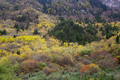 Autumn forest. Colorful forest in Jiuzhaigou in Autumn Royalty Free Stock Images