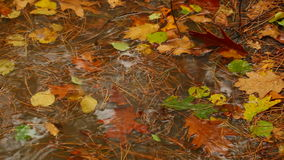 Autumn. Forest with colorful autumn leaves stock video footage