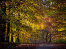 In Autumn Forest Stock Images
