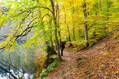 Autumn, forest, colorful leaves and waterfall, stream, lake views. The third season of the year, when crops and ts are gathered and leaves fall, in the stock photos
