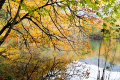 Autumn, forest, colorful leaves and waterfall, stream, lake views. The third season of the year, when crops and fruits are gathered and leaves fall, in the royalty free stock photos