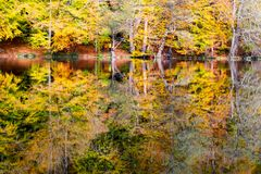 Autumn, forest, colorful leaves and waterfall, stream, lake views. The third season of the year, when crops and fruits are gathered and leaves fall, in the royalty free stock photography