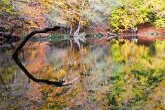 Autumn, forest, colorful leaves and waterfall, stream, lake views royalty free stock photo