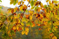 Autumn, forest, colorful leaves and waterfall, stream, lake views royalty free stock photography