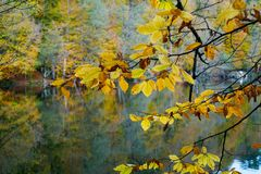 Autumn, forest, colorful leaves and waterfall, stream, lake views royalty free stock images