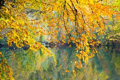 Autumn, forest, colorful leaves and waterfall, stream, lake views. The third season of the year, when crops and fruits are gathered and leaves fall, in the royalty free stock image