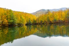 Autumn, forest, colorful leaves and waterfall, stream, lake views. The third season of the year, when crops and fruits are gathered and leaves fall, in the royalty free stock photo