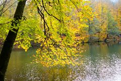 Autumn, forest, colorful leaves and waterfall, stream, lake views. The third season of the year, when crops and fruits are gathered and leaves fall, in the stock images