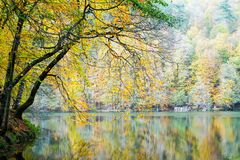 Autumn, forest, colorful leaves and waterfall, stream, lake views. The third season of the year, when crops and fruits are gathered and leaves fall, in the stock photos