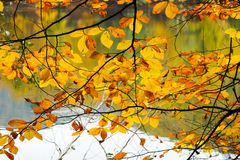 Autumn, forest, colorful leaves and waterfall, stream, lake views stock photos