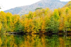 Autumn, forest, colorful leaves and waterfall, stream, lake views. The third season of the year, when crops and fruits are gathered and leaves fall, in the stock photography