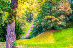 Autumn forest. Colorful autumn forest with path in Czech Royalty Free Stock Photography