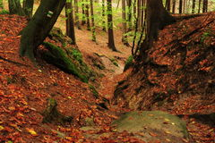 Autumn in the forest Royalty Free Stock Photo