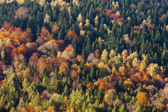 Autumn forest, colorful trees Royalty Free Stock Image