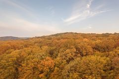 Autumn forest colorful trees and leafs aerial view. Forest Aerial stock photo