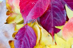 Autumn and forest, colorful trees and leaves. , the third season of the year, when crops and fruits are gathered and leaves fall, in the northern hemisphere royalty free stock photo