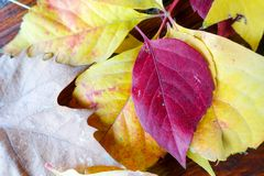 Autumn and forest, colorful trees and leaves royalty free stock images