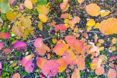Autumn and forest, colorful trees and leaves royalty free stock photos