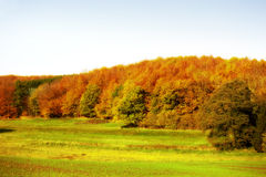 Autumn forest colors Royalty Free Stock Image