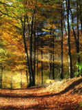 Autumn forest colors Stock Photo