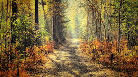 Autumn in the forest. Autumn colors in the forest Royalty Free Stock Photography