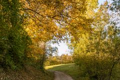Autumn Forest Colors with Curved Path Royalty Free Stock Photos