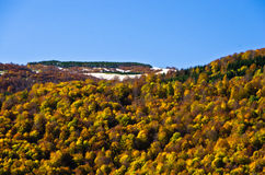 Autumn forest colors at rolling hills of Zeljin mountain Royalty Free Stock Images