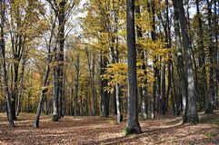 Autumn forest colours. Beautiful view of the forest in autumn period, the trees are dressed in colorefull leaves Stock Image