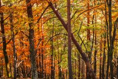 Forest of conifers and deciduous trees stock images