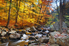 Free Autumn Forest Creek Royalty Free Stock Images - 11519319