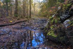 Autumn forest and creek Royalty Free Stock Image