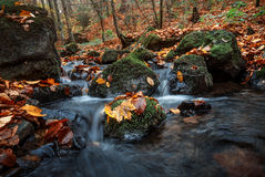 Autumn forest with creek Stock Images