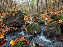 Autumn forest with creek Royalty Free Stock Photography