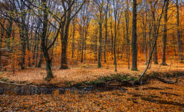 Autumn forest with creek Royalty Free Stock Photo