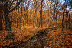 Autumn forest with creek Stock Photos