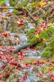 Autumn Forest Creek di stupore Fotografie Stock Libere da Diritti