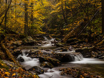 Autumn forest creek. Autumn forest in full foliage and stream rushing down the creek over fall leaves covered rocks in a rainy day Stock Image